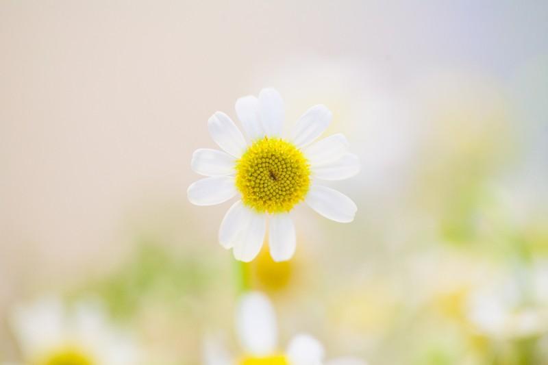 5 solutions pour vaincre les allergies
