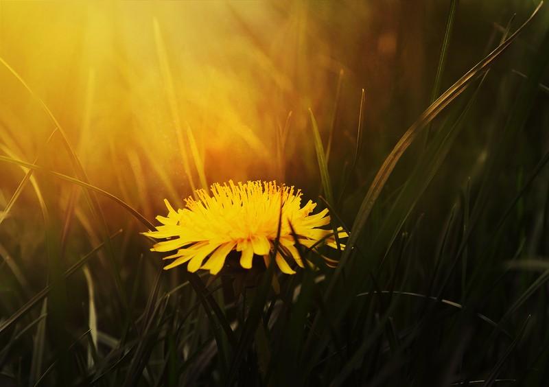 Conseils naturo et aroma de printemps