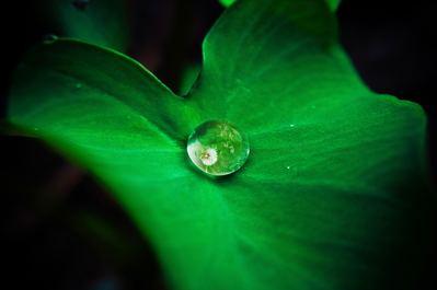 remboursement naturopathie aromathérapie mutuelles